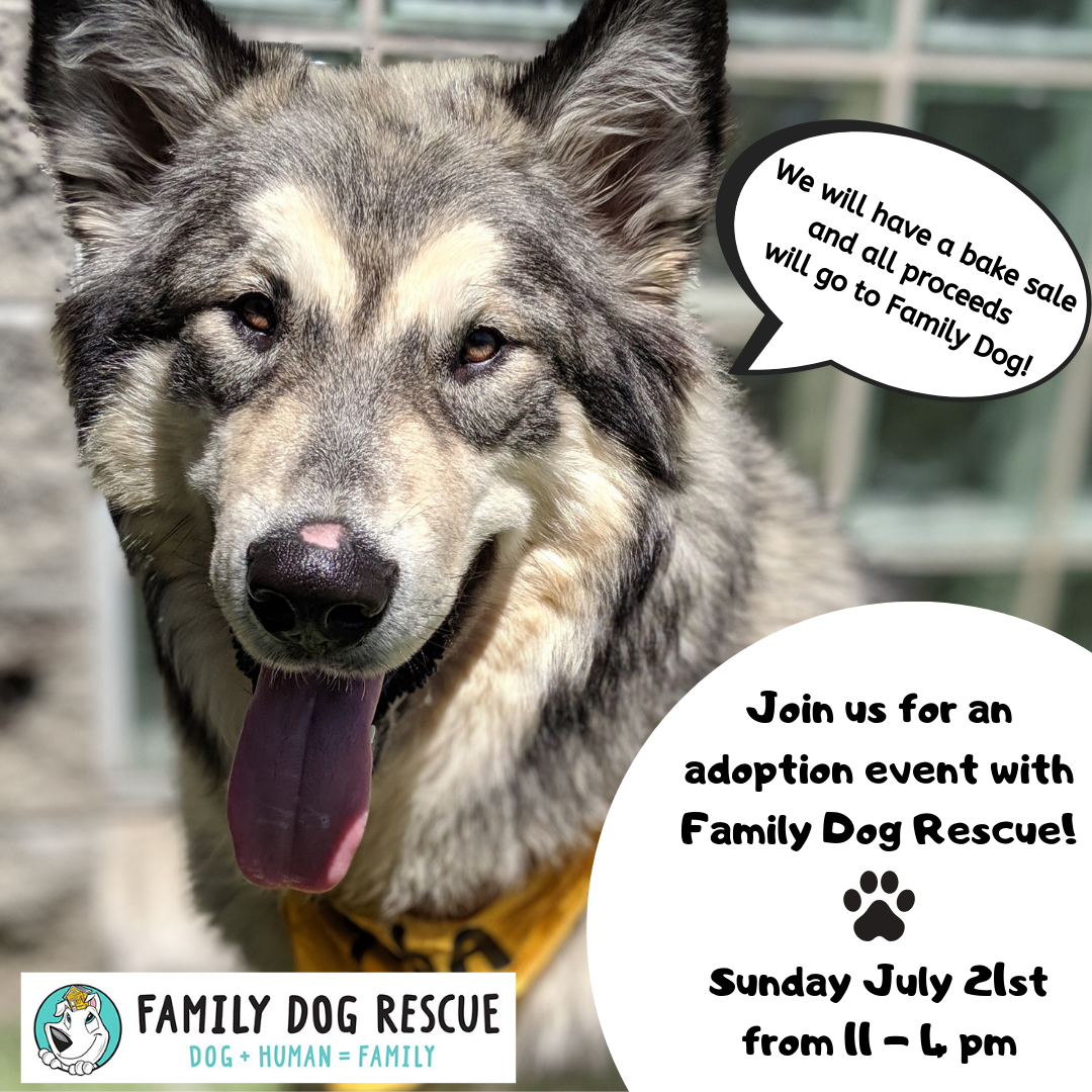 Adoption Event at Animal Connection! @ Animal Connection