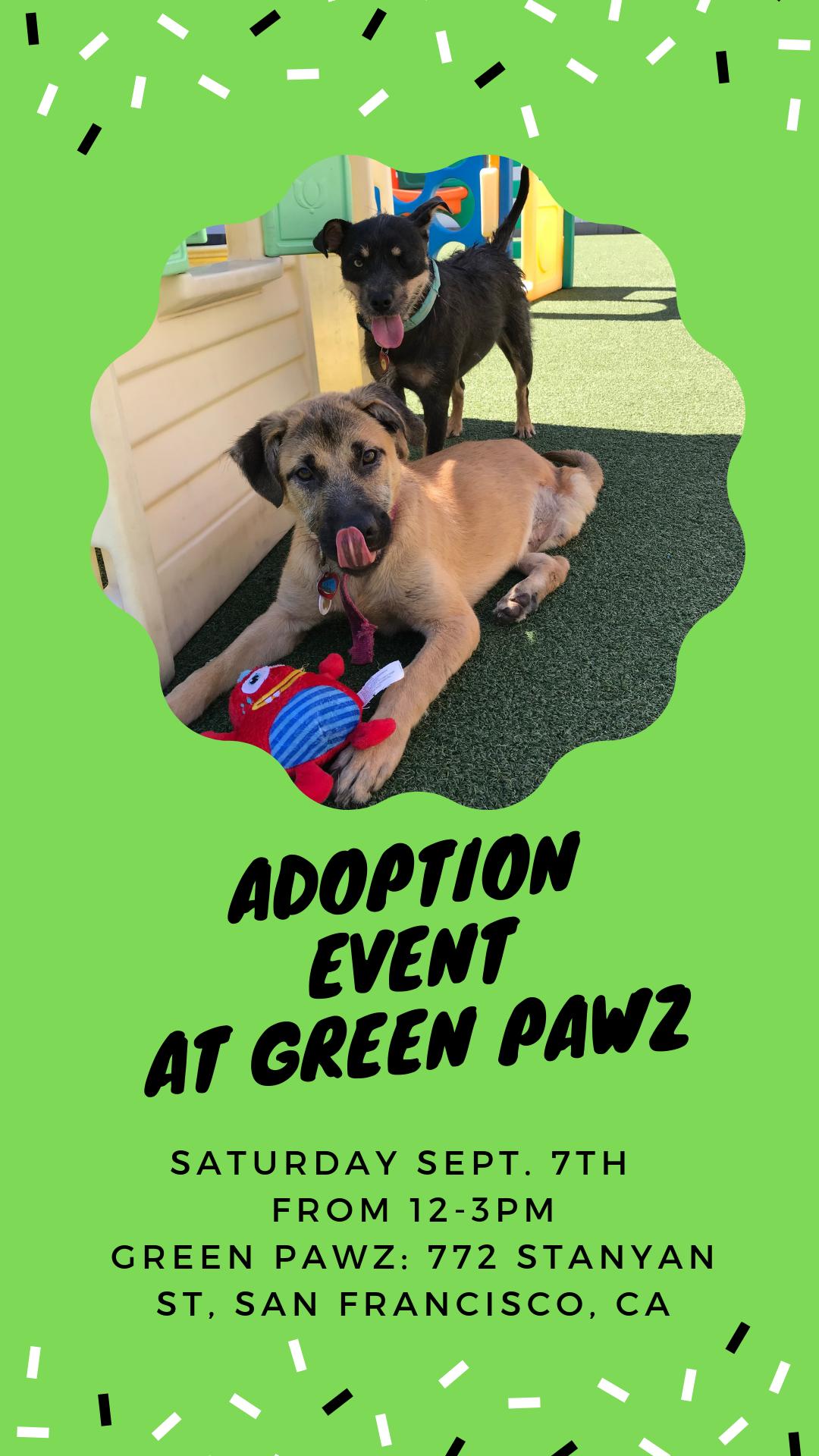 Adoption Event at Green Pawz! @ Green Pawz