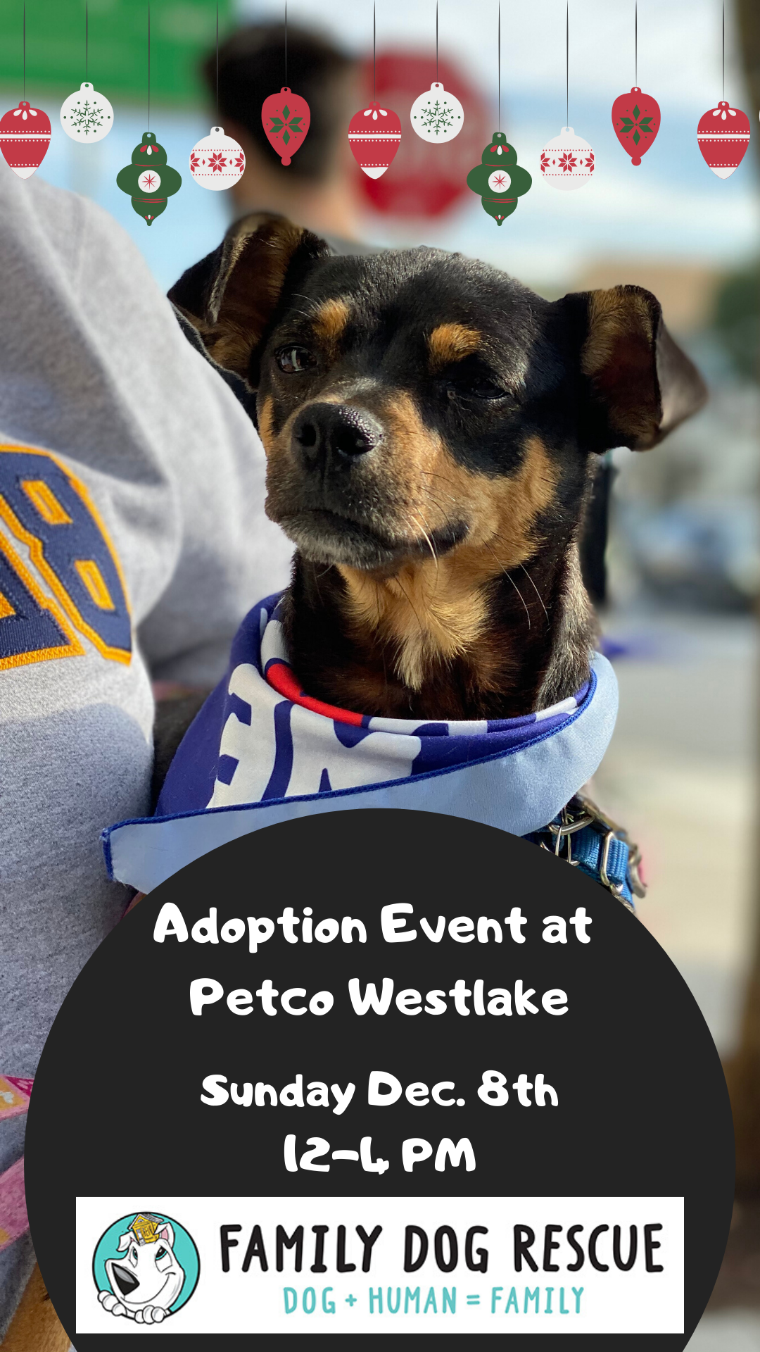 Adoption Event at Petco Unleashed in Westlake ! @ Petco Unleashed - Westlake