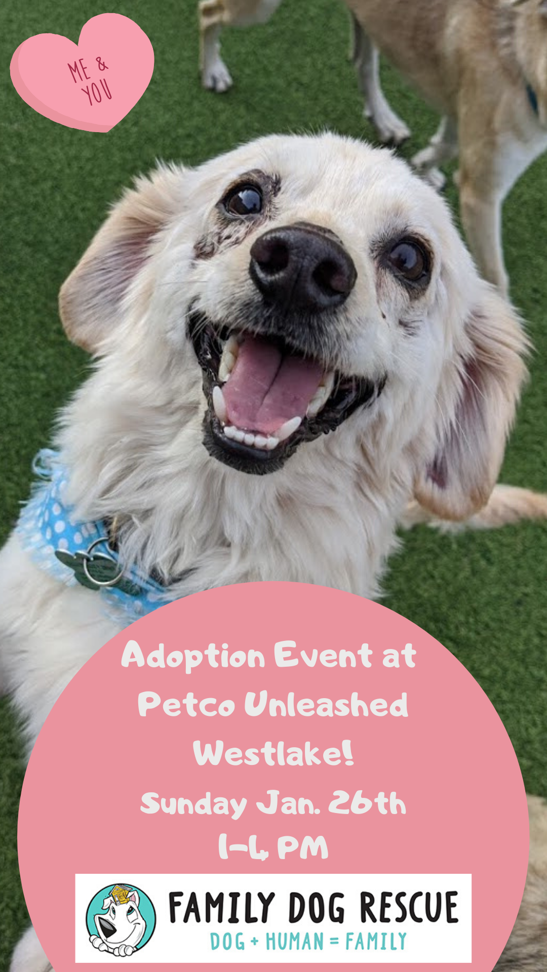Adoption Event at Petco Unleashed in Westlake! @ Petco Unleashed - Westlake