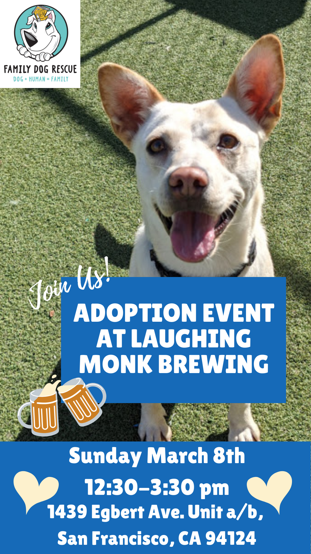 Adoption Event at Laughing Monk Brewing @ Laughing Monk Brewing